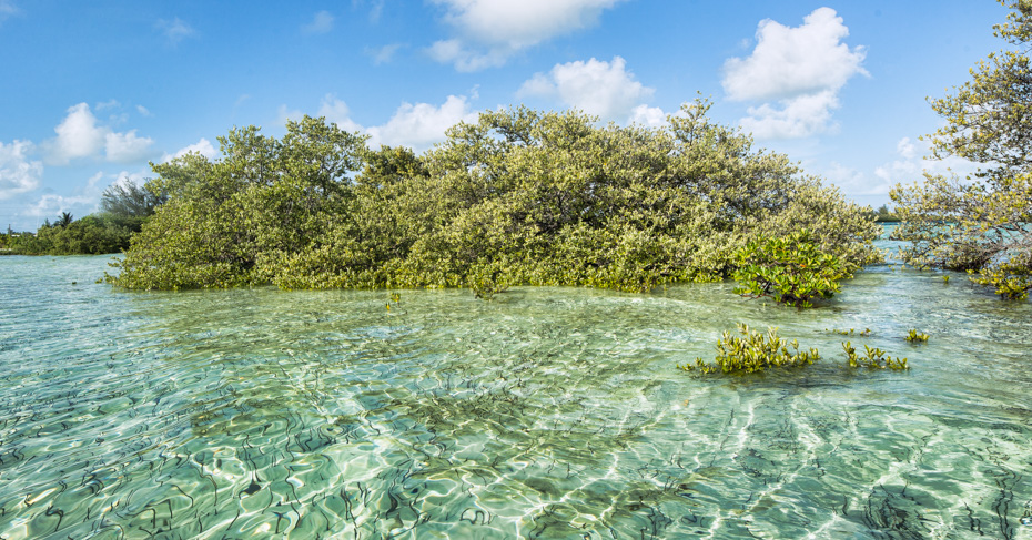 One day cruise to bimini from miami by plane bahamas day for Bimini fishing charters