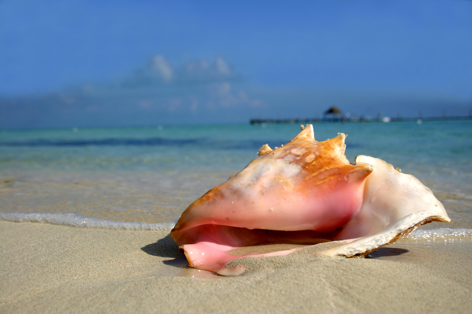 Nassau Beaches Bahamas, explore the best beaches in Nassau Bahamas.