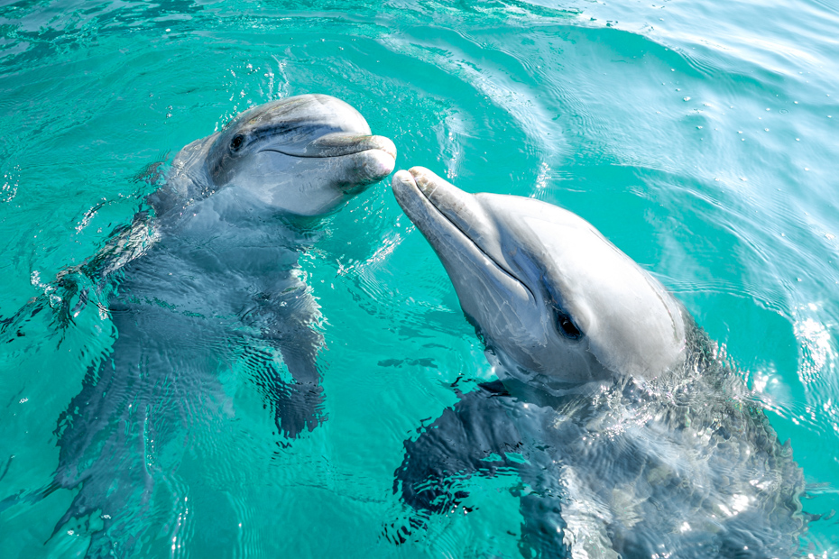 Wildlife in the Bahamas. Visit the dolphins at Bahamas Freeport on a one day cruise to Bahamas with Bahamas Air Tours.