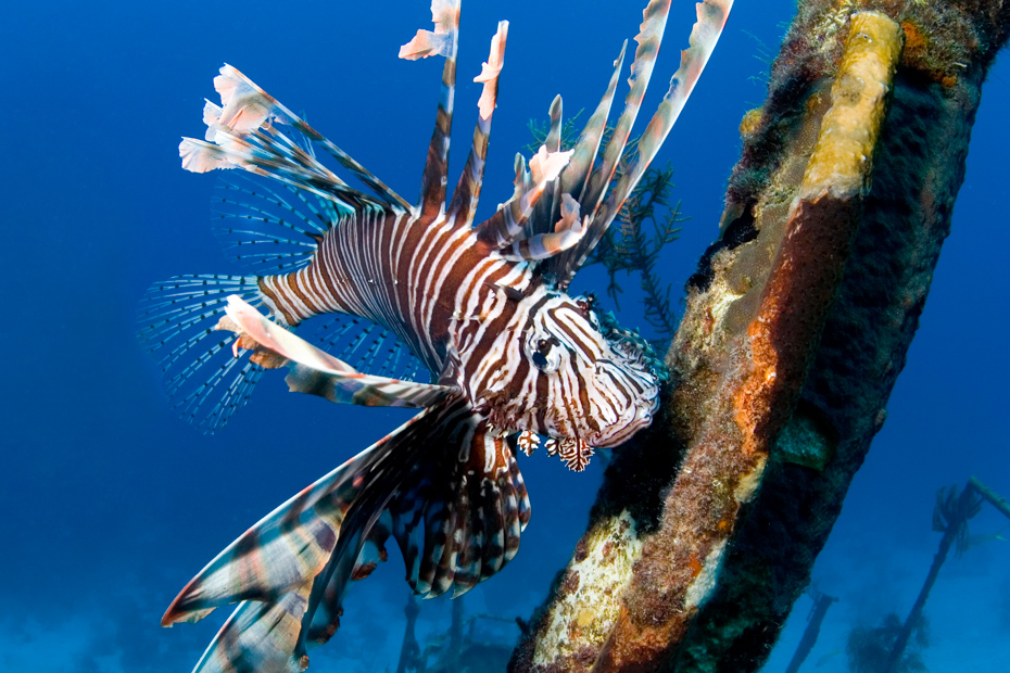 Snorkel and Dive with Bahamas Fish on a Bahamas Air Tours Day trip to the Bahamas by plane from Miami or Nassau.