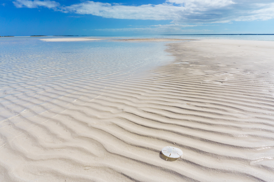 Powell Cay, Abaco, Bahamas - a bright white sand dollar sits on a rippled sandbar in the Sea of Abaco. Join the Staniel Cay Tours on any of the many Staniel Cay Day Trips from Miami. There are also Staniel Cay Day tour from Florida and tours to Staniel Cay by flight.