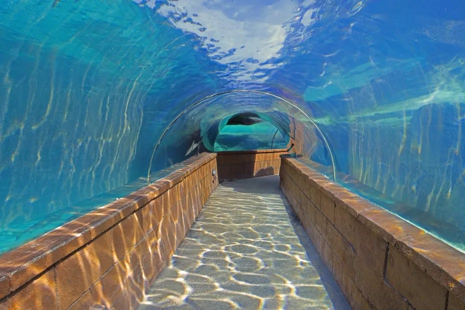 Atlantis Hotel Bahamas offers one of the best aquatic experiences. Walk with sharks underwater at Atlantis Bahamas resort or take a day trip to exuma to see Pig Beach.