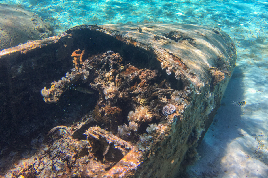 Visit the Bahamas plane wreck on a Miami to Bahamas Day Trip by plane and Staniel Cay tour.