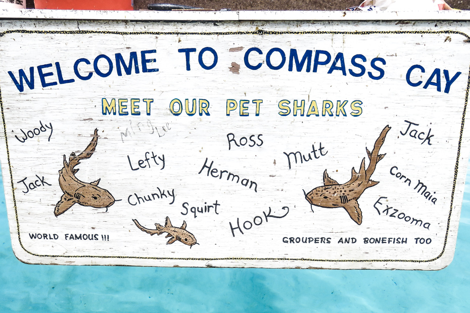Compass Cay Bahamas Sharks are named by locals. They are nurse and lemon sharks and found throughout the Bahamas.