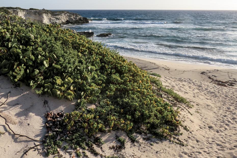 Ocean Beach on Staniel Cay Bahamas is on the East coast of the Island.