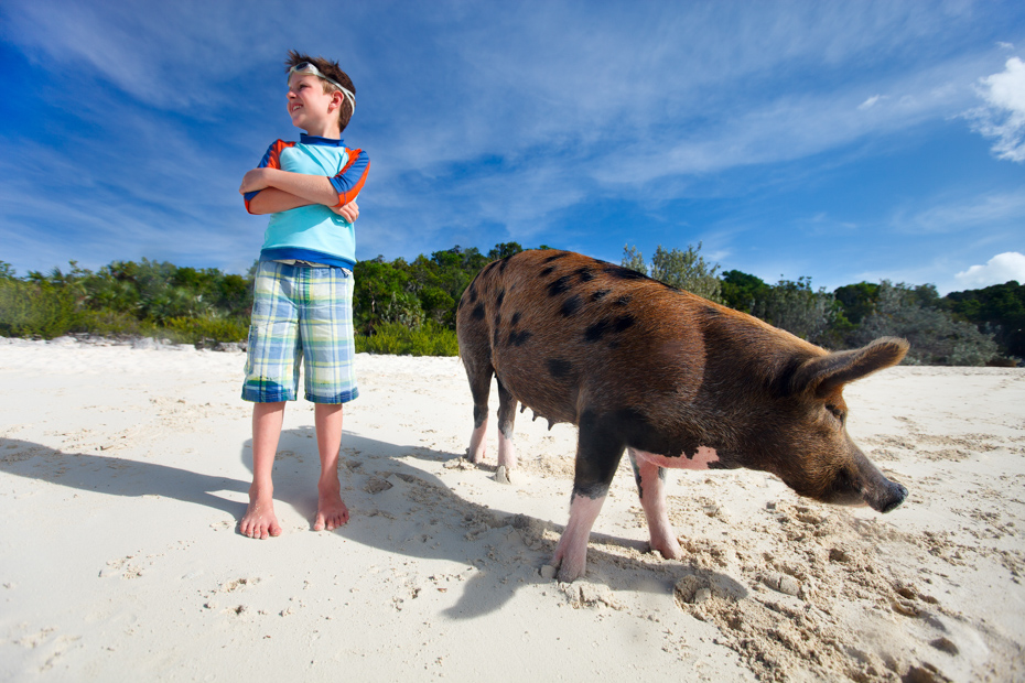 Swimming with pigs Bahamas is one of the most exciting things to do at Pig Beach and all over the Exumas.