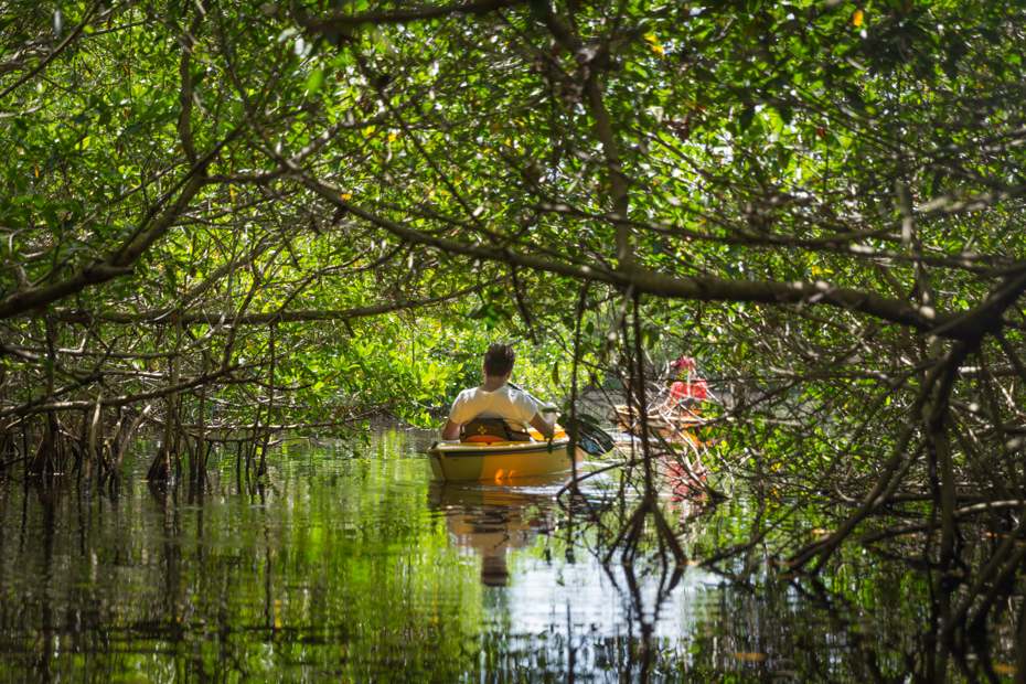 Kayak through mangrove forests at Everglades National Park. One of the best things to do near miami florida on Florida vacation.