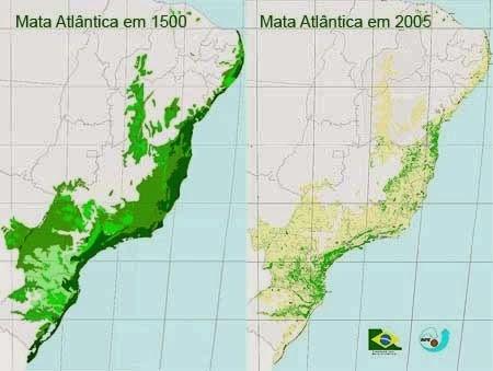 Além do fator das queimadas de coivara, da expansão monocultora dos canaviais, o avanço do desmatamento praticado nestes séculos de ocupação, levou quase a extinção do bioma da Mata Atlântica.