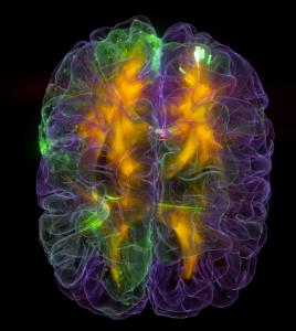 Glass brain tecnología que hará posible ver tus pensamientos en realidad virtual