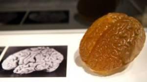 Una foto y una réplica del cerebro de Einstein.