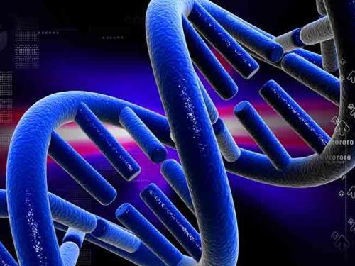 El organismo artificial que puede tener el secreto de la vida