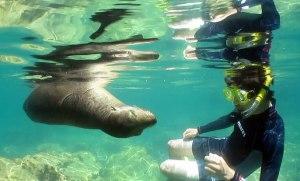 Viewing California sea lion characteristics underwater.