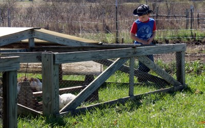 A family affair: Pastured Poultry