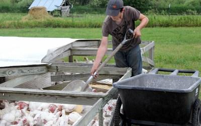 How we do free range, pasture raised, GMO free poultry: vlog post