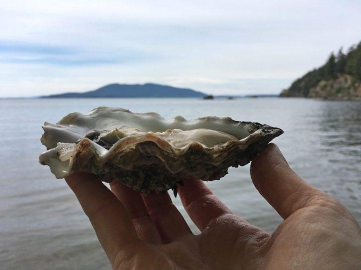 Raw Oyster at Samish Bay