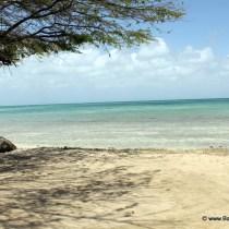 Vakantie Aruba, Eagle Beach Aruba, Divi divi boom, Aruba, Aruba Holiday