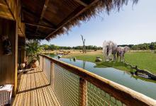 صورة فندق في بريطانيا يوفّر رؤية الأفيال والفهود عن قرب من داخل غرفة الاقامة