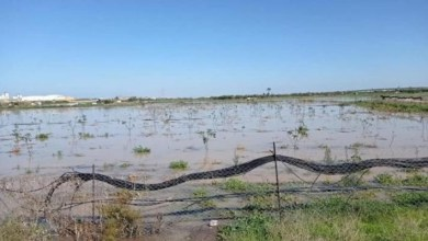 صورة الاحتلال يغرق أراضي المواطنين الزراعية شرق غزة