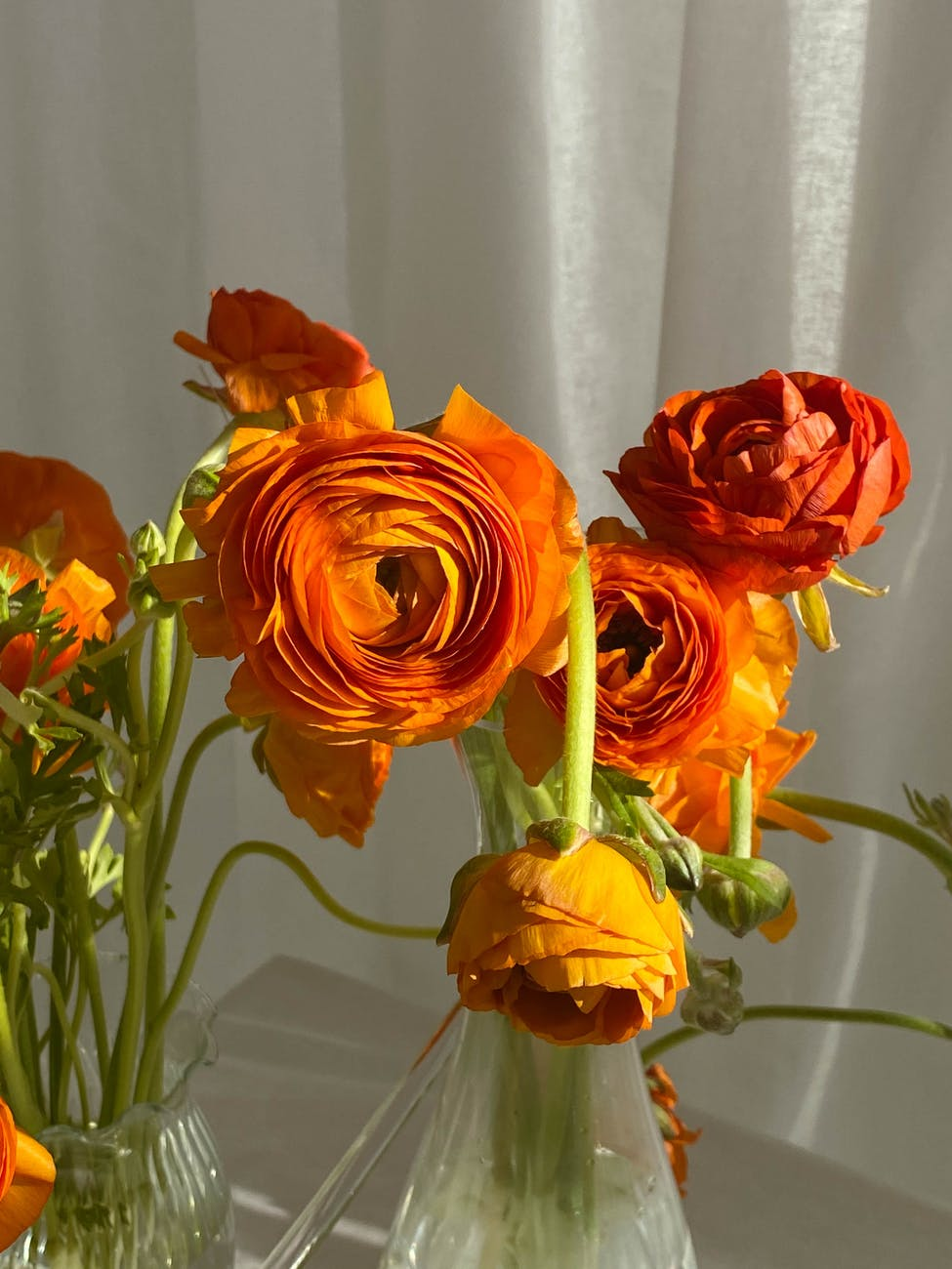 vases of delicate ranunculus asiaticus flowers arranged on table