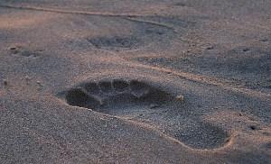 footprint-908273_1280