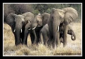 sisterhood- the ultimate herd