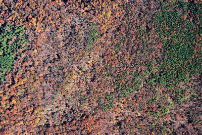 Aerial Mapping Forestry Timber Ozark Timber Species