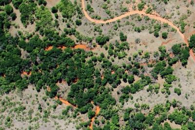 Invasive Species Mapping Hackberry Versus Mesquite