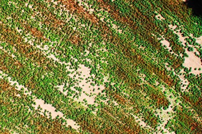 Precision Agriculture Mapping Cotton Stress
