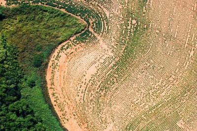 Precision Agriculture Mapping Cotton Variability Plant Population Fingerprint