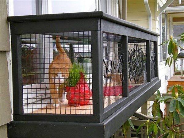 cat window box cat solarium cat