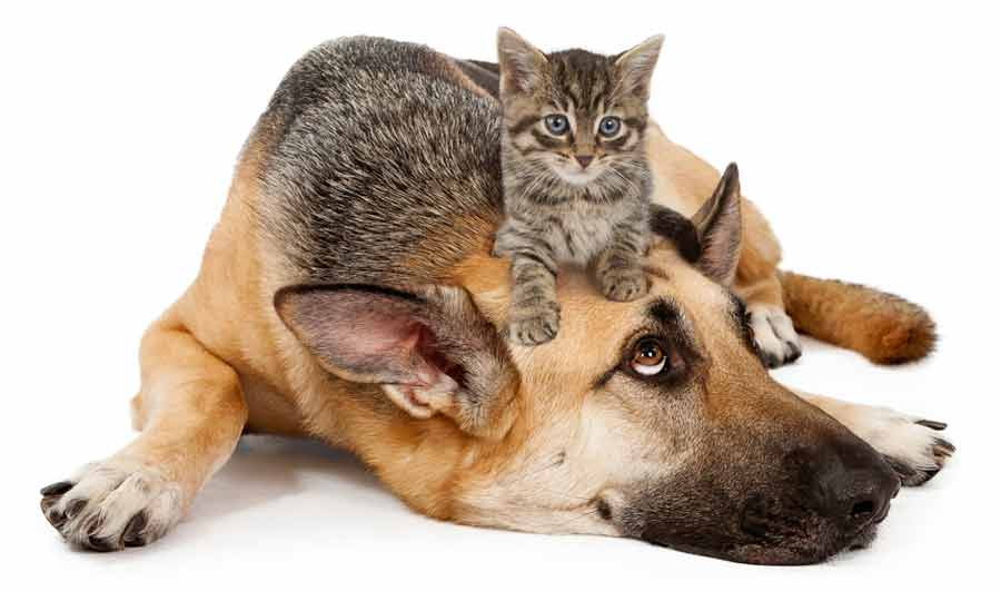 dog-kitten-onhead900web