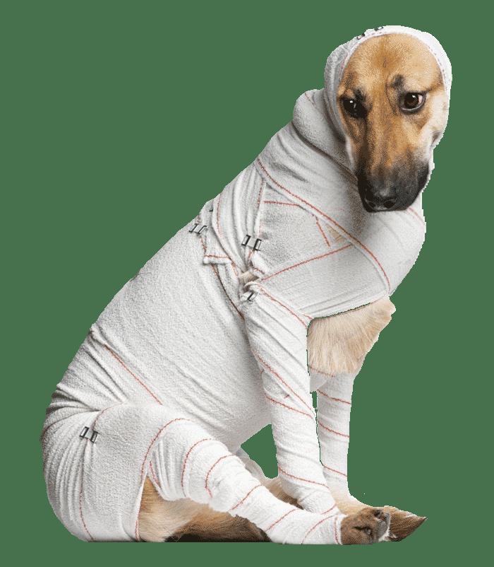 emergency-bandaged-dog700