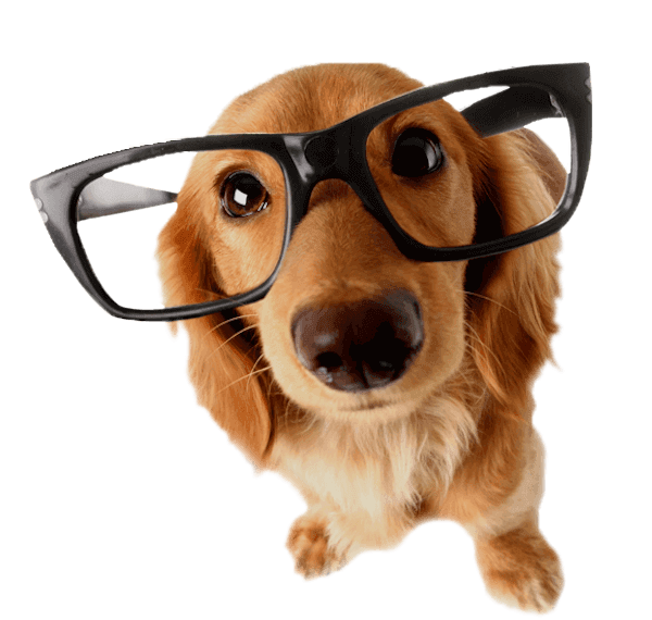 dog-reading-glasses600png