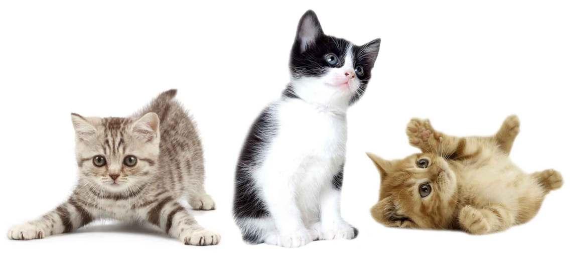 kittens-white1920