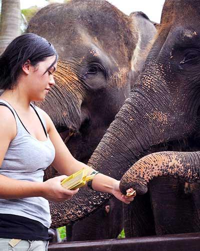 laver le gros éléphant à bali