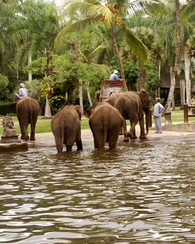 elephant-bali-3