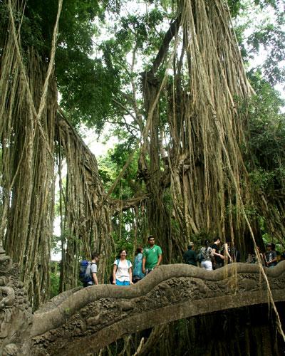 ubud-monkey-forest-4