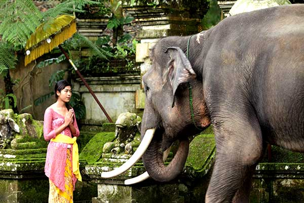 elephant-bali-5