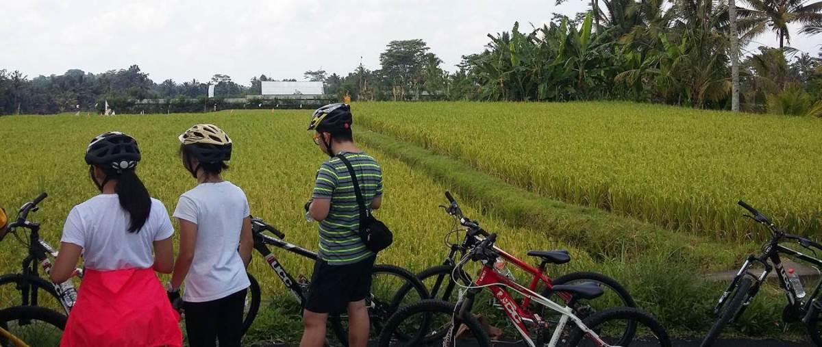 Bali Ubud Eco Cycling Tour