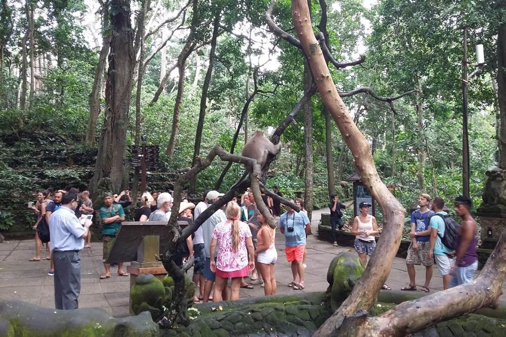 Bali Ubud Half Day Tour - Gallery 03030317