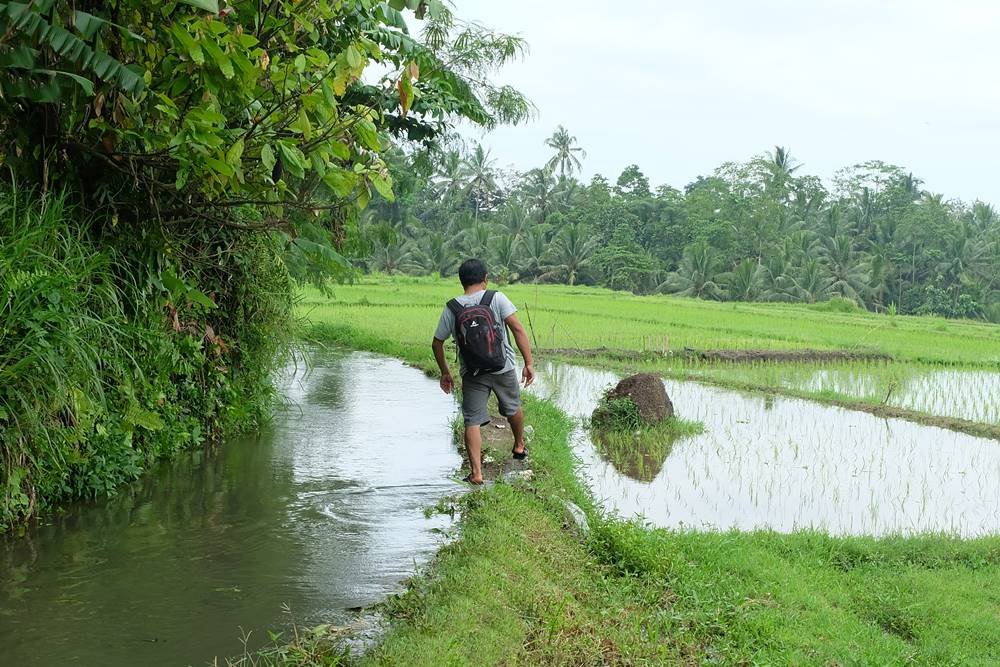 Bali Ubud Rice Paddy Trekking - Gallery 04200217