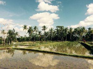 meteo a Bali agosto