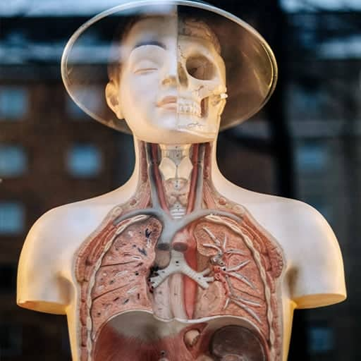 ITEC Level 3 Diploma in Anatomy and Physiology - Bali BISA
