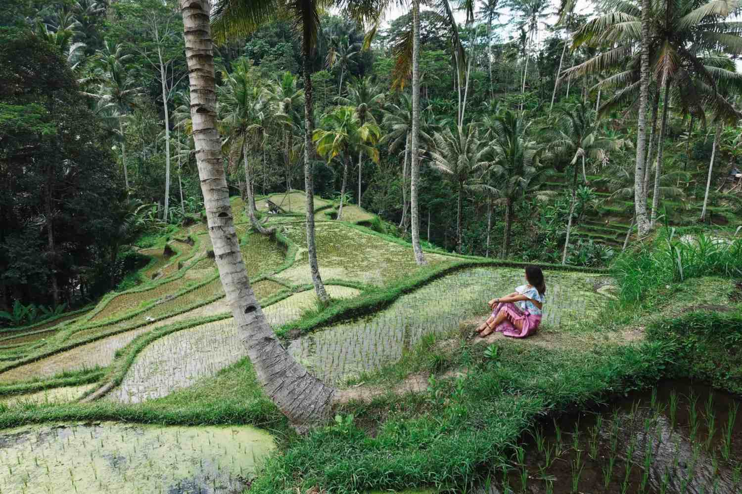 Learn Massage Bali - Woman sitting and looking a rice paddy field in Bali