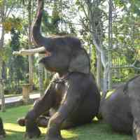 Bali Bakas Elephant Ride Tour