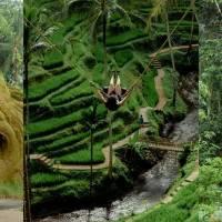 Bali Ubud Swing Tour