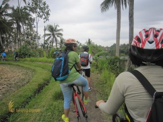 sodexo, indonesia, sodexo indonesia, bali, incentive, tours, bali incentive, incentive tours, bali incentive tours, rice paddy cycling