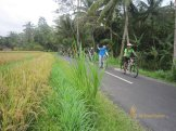 sodexo, indonesia, sodexo indonesia, bali, incentive, tours, bali incentive, incentive tours, bali incentive tours, ubud cycling, cycling adventures