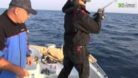 Kuşadası – Trança ve Antenli Mercan Avı