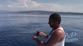 Yakalanan balon balığının arkasında ölmesini bekleyen diğer balonlar